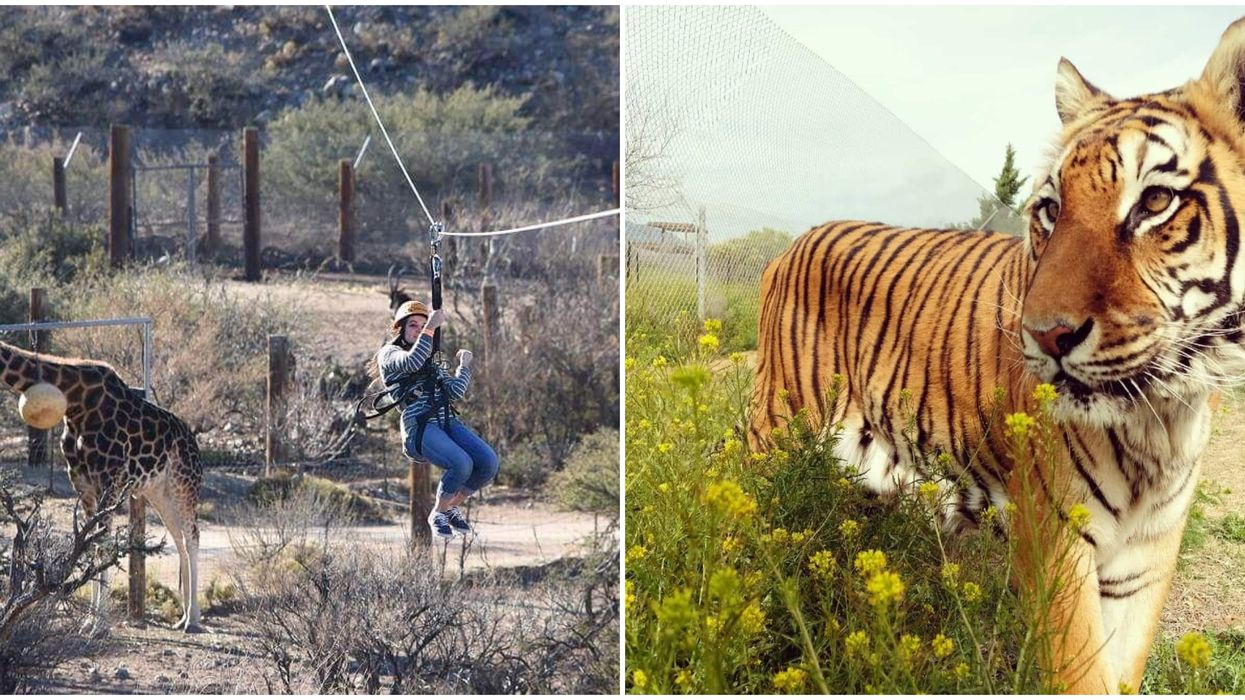 You Can Zip Line Over African Wildlife At This Zoo In Arizona