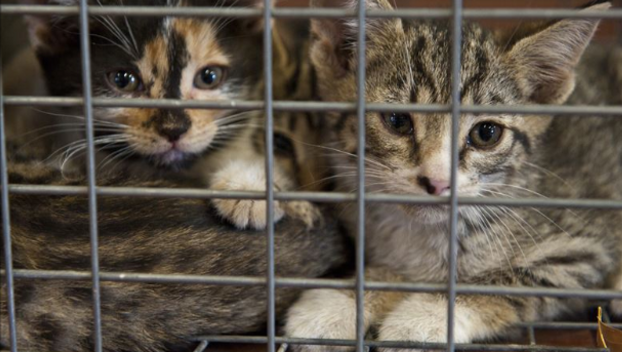 79 Cats Were Just Found In One Of The Largest Hoarding Cases Regina Has Ever Seen