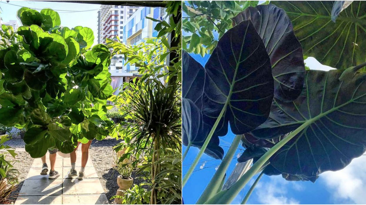 You Can Buy Spectacular Larger-Than-Life Plants At This Miami Greenhouse