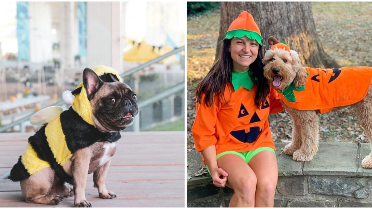 6 Adorable Halloween Dates You Can Go On With Your Dog In Toronto This Month