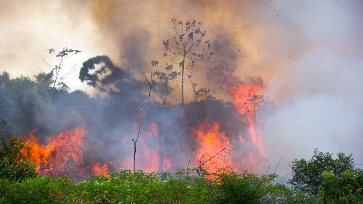 Feux en Amazonie: Les personnalités partagent de la fausse information au Québec