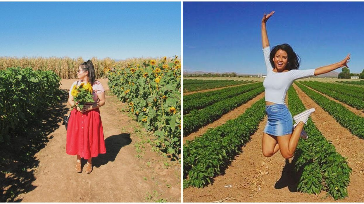 You Can Get Lost In This Corn Maze While Drinking Wine Next Month In Arizona