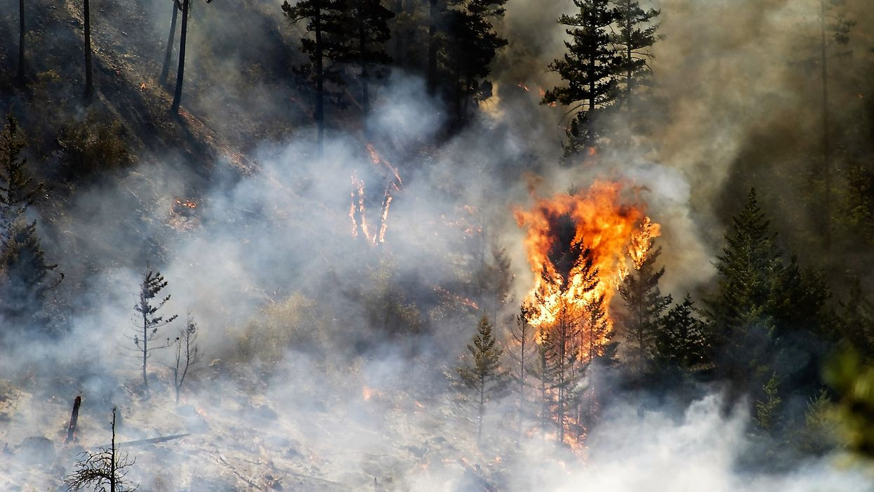 Canada's Forest Fires