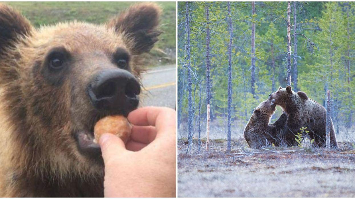 Feeding Bears Timbits