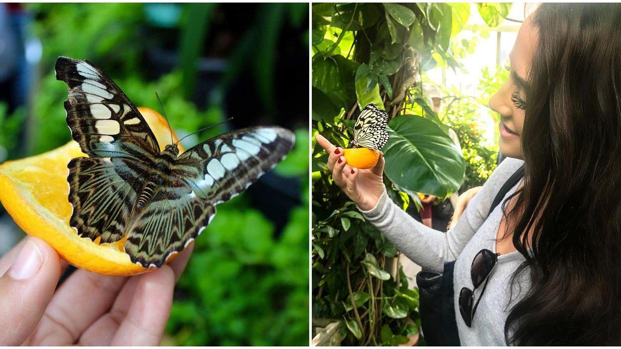 Butterfly Show Ottawa