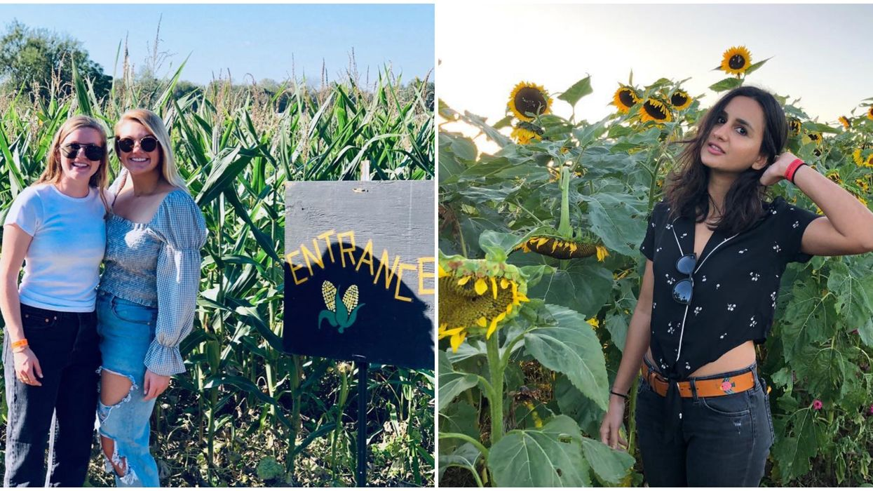 You Can Get Lost In A Massive Corn Maze And Sunflower Field In Central Texas Next Month