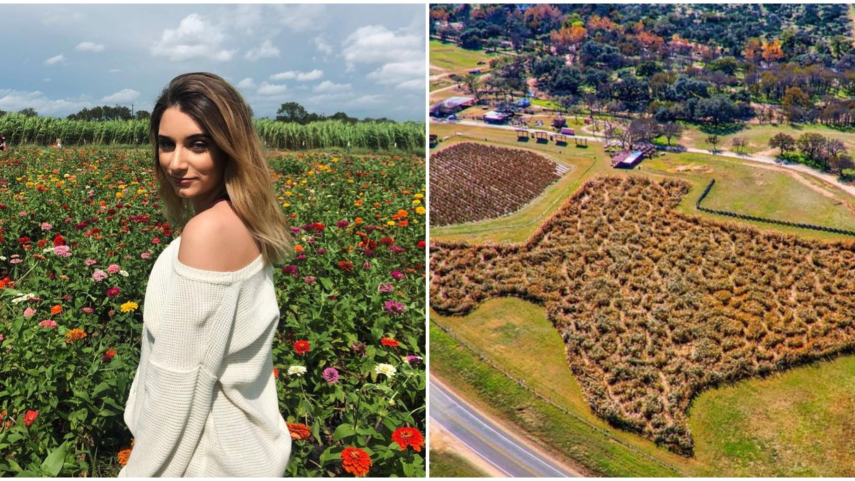 This Berry Farm Near Austin Has A Giant Maze That Is Literally In The Shape Of Texas