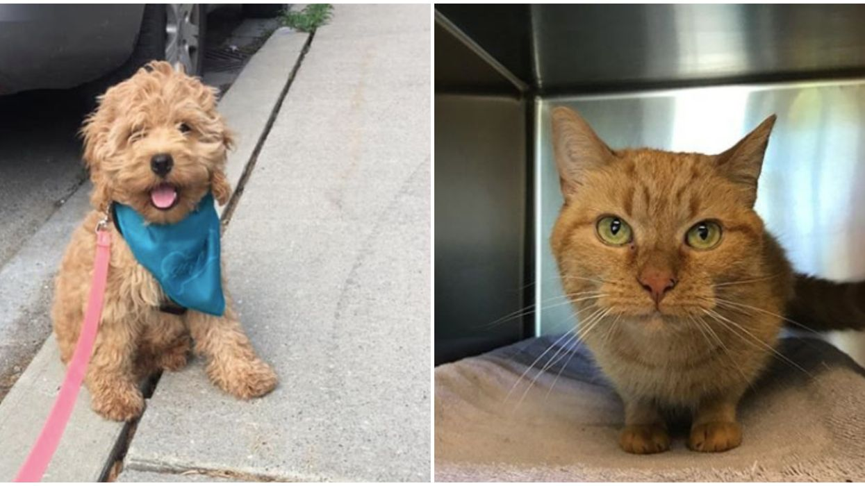 Toronto Animal Services Is Giving Away Cats & Dogs For Under $50 Until The End Of August