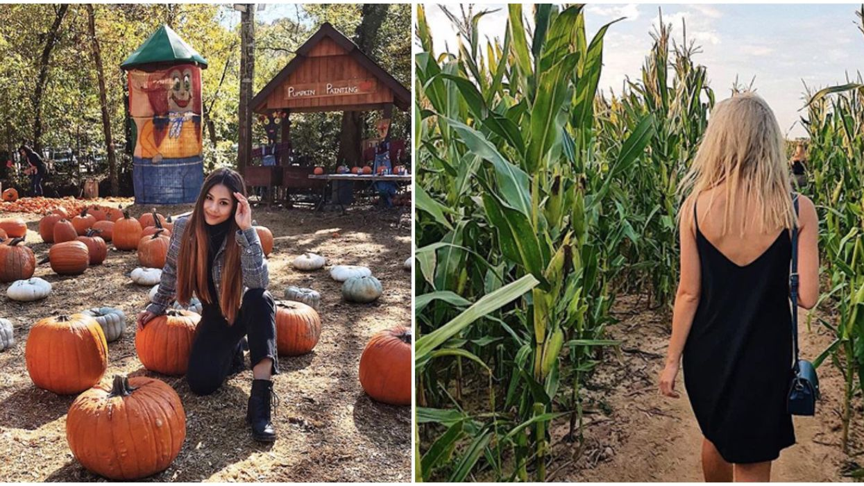 You Can Get Lost In A Corn Maze & Frolic In A Pumpkin Patch In Georgia This September