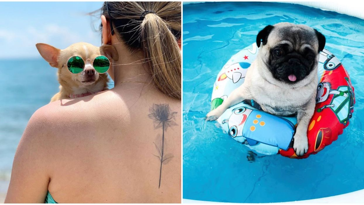 An End-Of-Summer Doggy Pool Party Is Happening In Mississauga This September