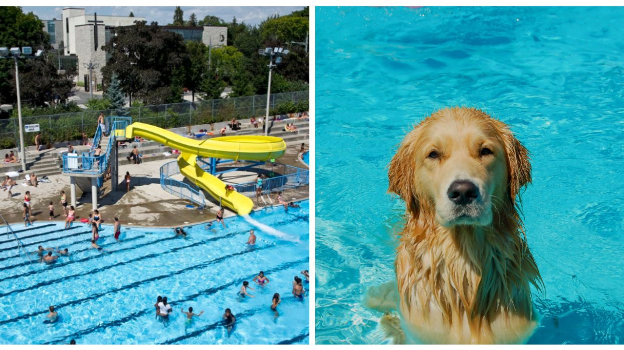 Dogs Will Be Allowed To Swim In These Toronto Public Pools This Long Weekend
