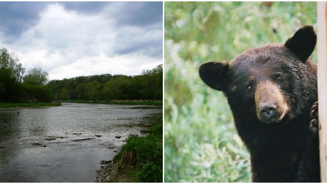 A Mysterious Black Bear Sighting Was Reported In A Toronto Park On Thursday, Say Police