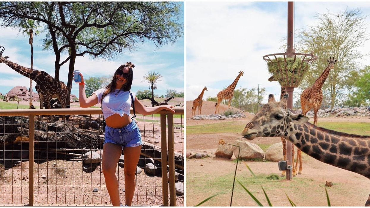 The Phoenix Zoo In Arizona Is Hosting A Wild Boozy Safari Night This Fall