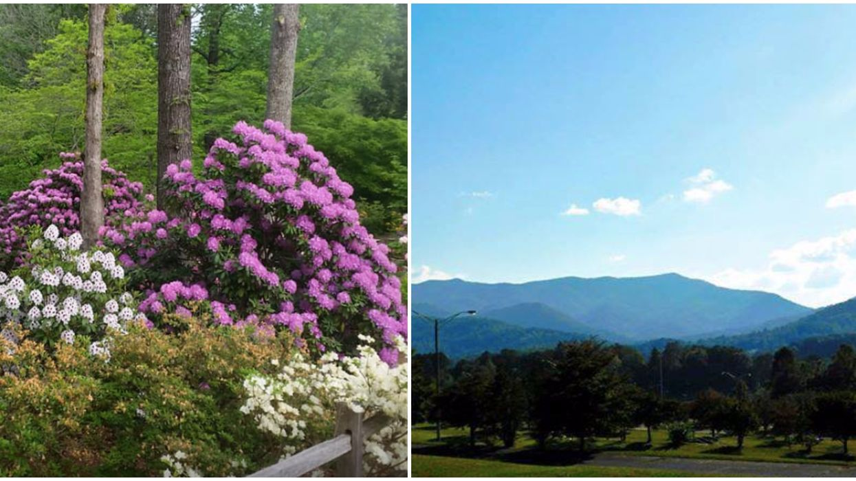 You Will See Over 3,000 Plants & Gorgeous Mountain Tops At This Georgia Garden