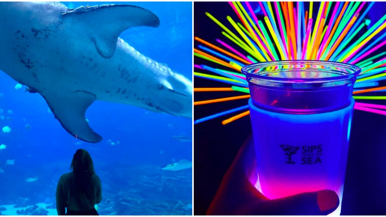 Georgia Aquarium Is Hosting A Boozy Murder Mystery Party In October
