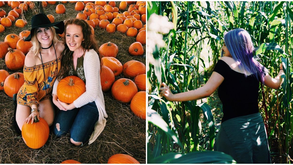 A 6-Day Pumpkin Festival With A Corn Maze And Hay Rides Is Coming To Florida This Fall