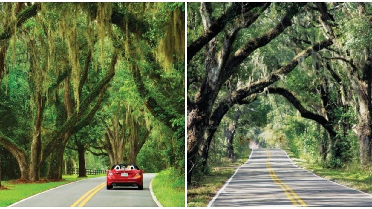 You Can Drive For Miles Down These Enchanting Canopy Roads Near Tallahassee