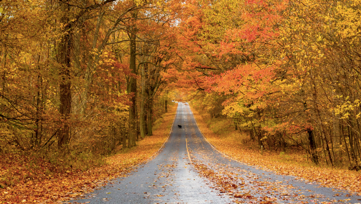 There's Actual Science Behind The Smells Canadians Associate With Fall