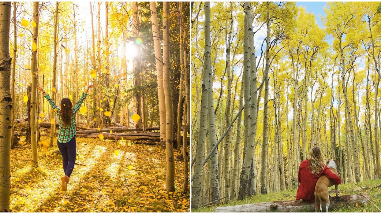 You Can Go On A Hike In Arizona This Fall That Takes You Through A Magical Golden Forest