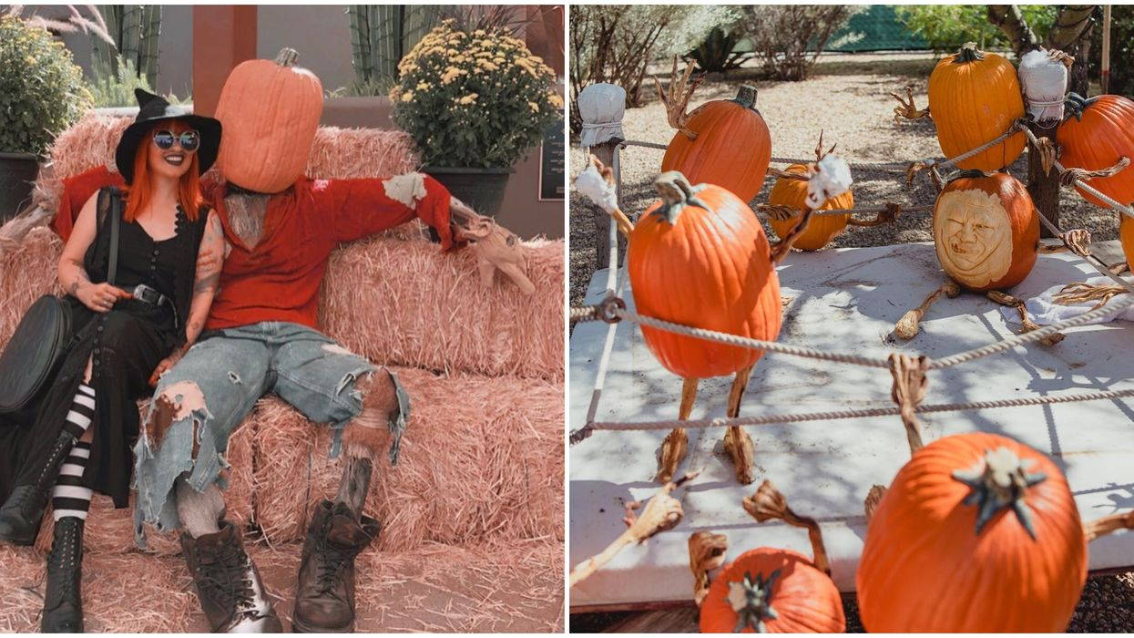 You Can Visit A Whimsical Pumpkin Garden This Fall In Arizona