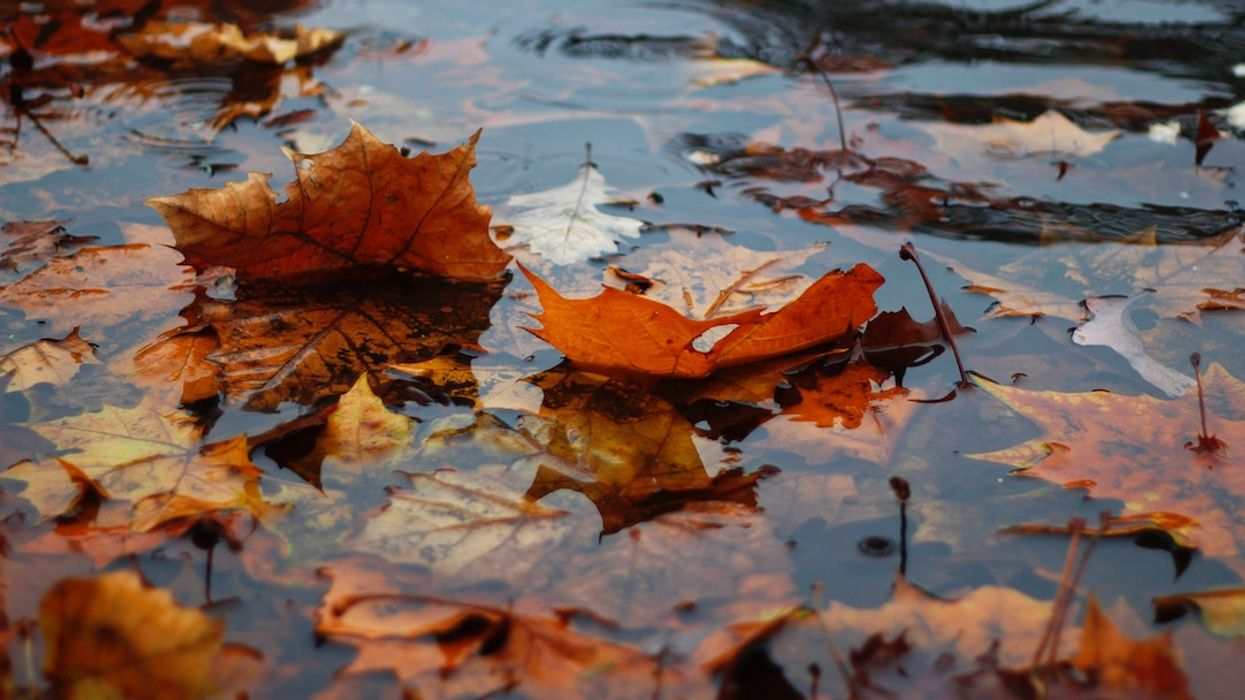 Fall Weather Starts In Vancouver This Weekend With A Week Straight Of Rain