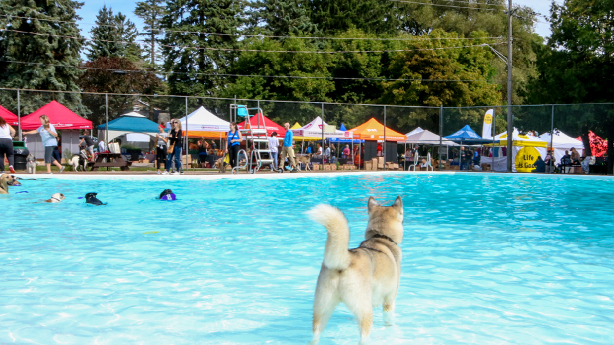 There Is A Puppy Party Happening In The GTA This Weekend & Here's What You Need To Know