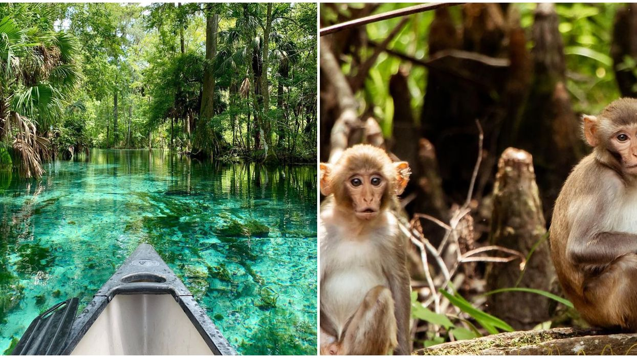 This Jungle-Like State Park Near Orlando Is Actually Inhabited By Wild Monkeys