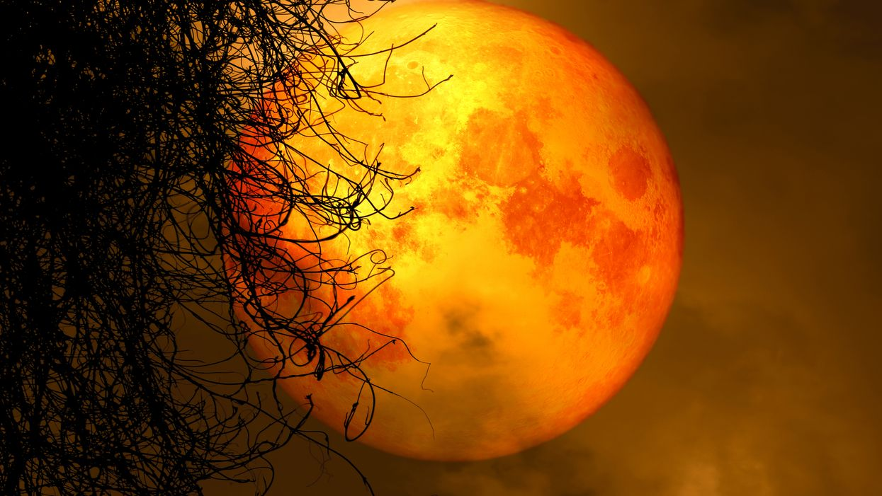 The spooky season is on the way, and with it comes all of those fall vibes we love so much. While we won't get the fall weather here, we have other ways to celebrate the season — and fall wouldn't be fall without the Harvest Moon. A rare version of this autumnal wonder will light up Florida skies this weekend.