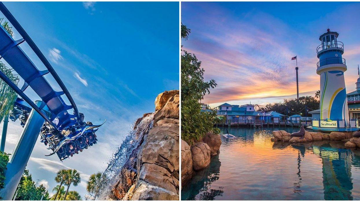 New Roller Coasters In Orlando Include SeaWorld's Ice Breaker Launch Coaster