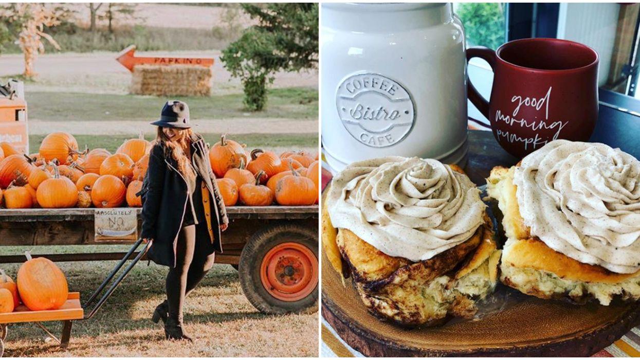 This Farm Near Toronto Has Gooey Pumpkin Cinnamon Buns & Choco-Dipped Butter Tarts