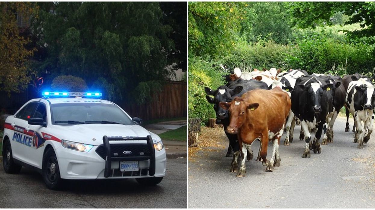 York Police Twitter Is Winning The Internet With Animal Sightings And Great Puns
