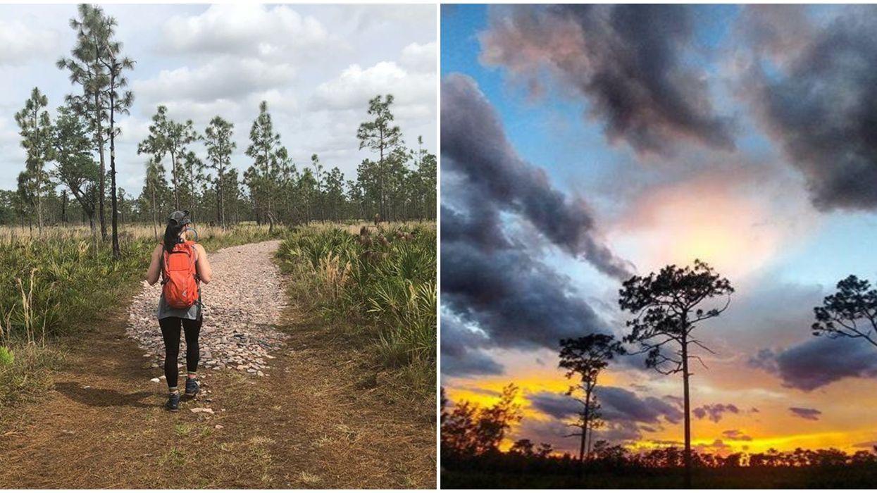 This Hidden Hiking Trail In Orlando Will Take You On A Serene Safari Adventure