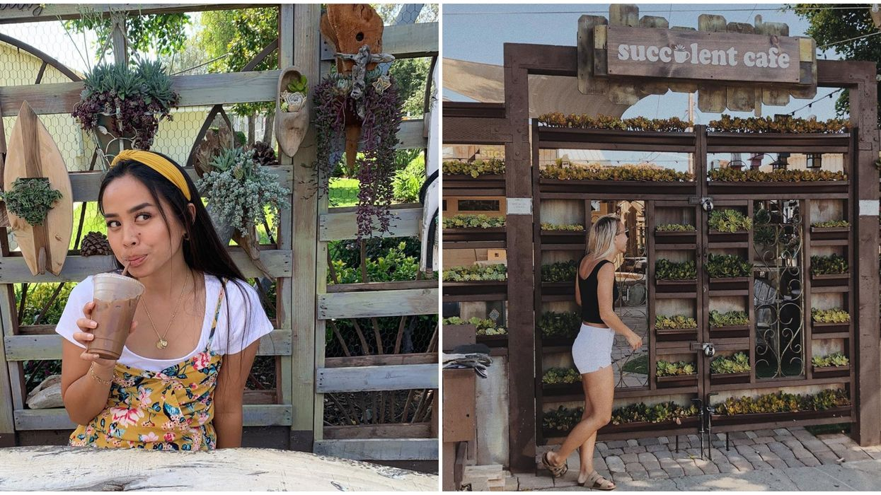 This Cute Succulent Cafe In Southern California Combines Your Two Favorite Things Coffee And Plants