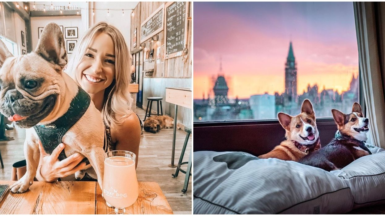 Dog Friendly Places In Ottawa For The Perfect Doggy Date Night