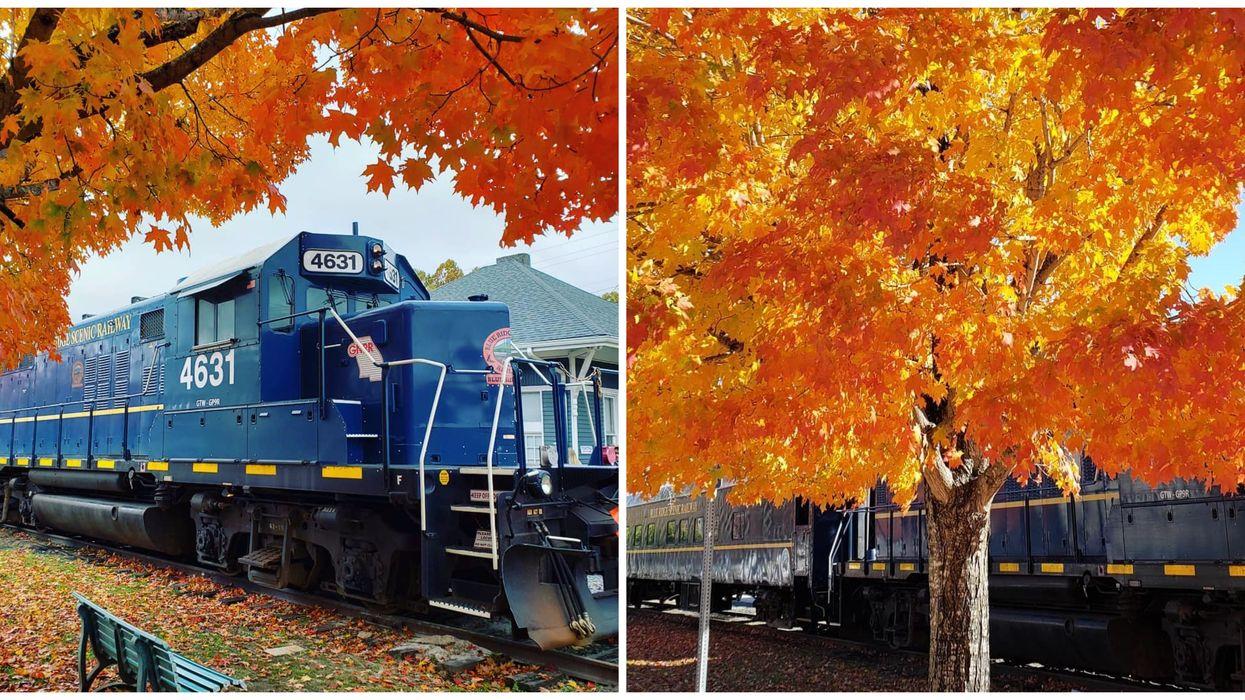 This Fall Foliage Train Ride Near Florida Will Take You On An Enchanting Autumn Adventure