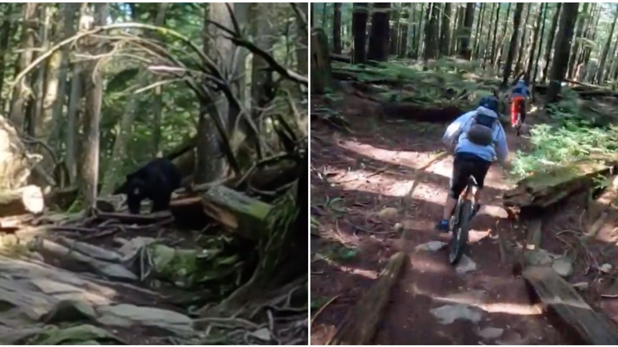 BC Mountain Bikers Were Chased By A Black Bear For Over 1 KM (VIDEO)