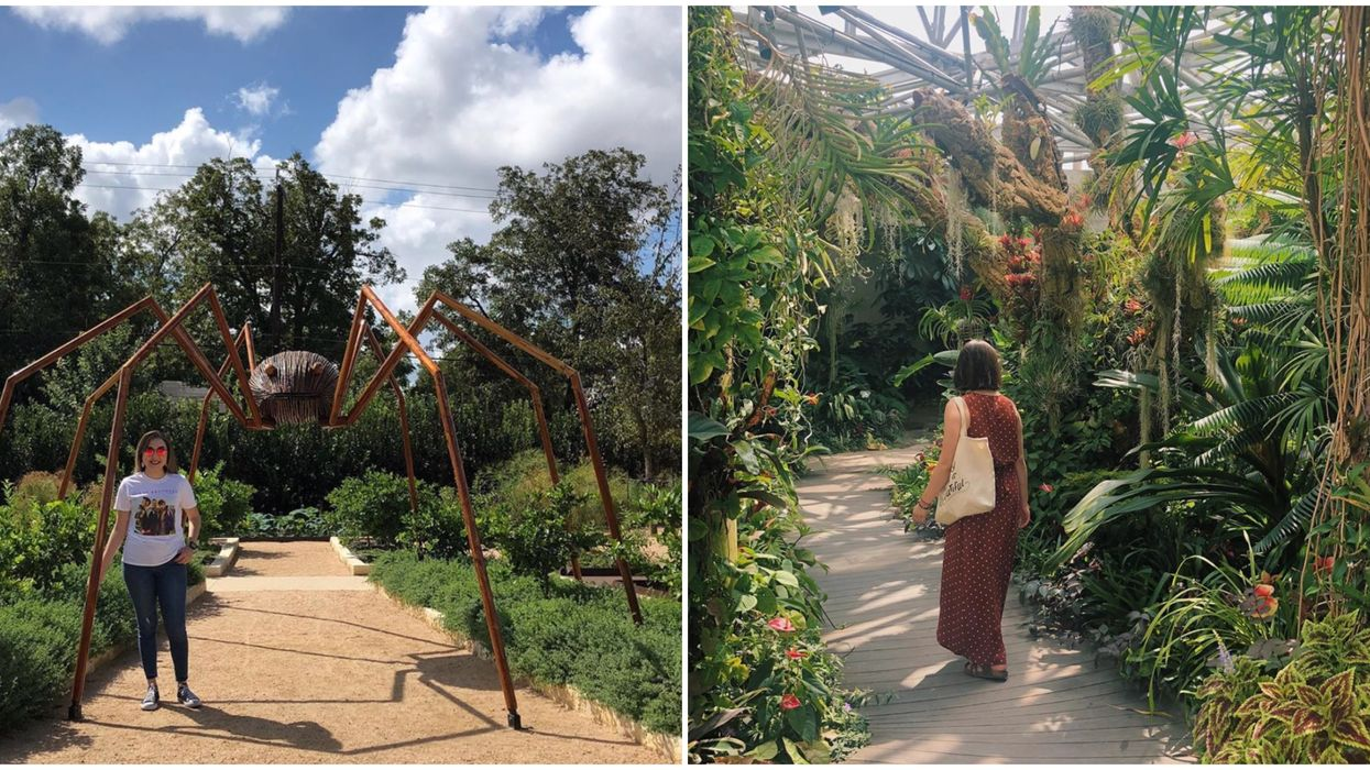 San Antonio Garden's Larger Than Life Sculptures Will Be There Until December