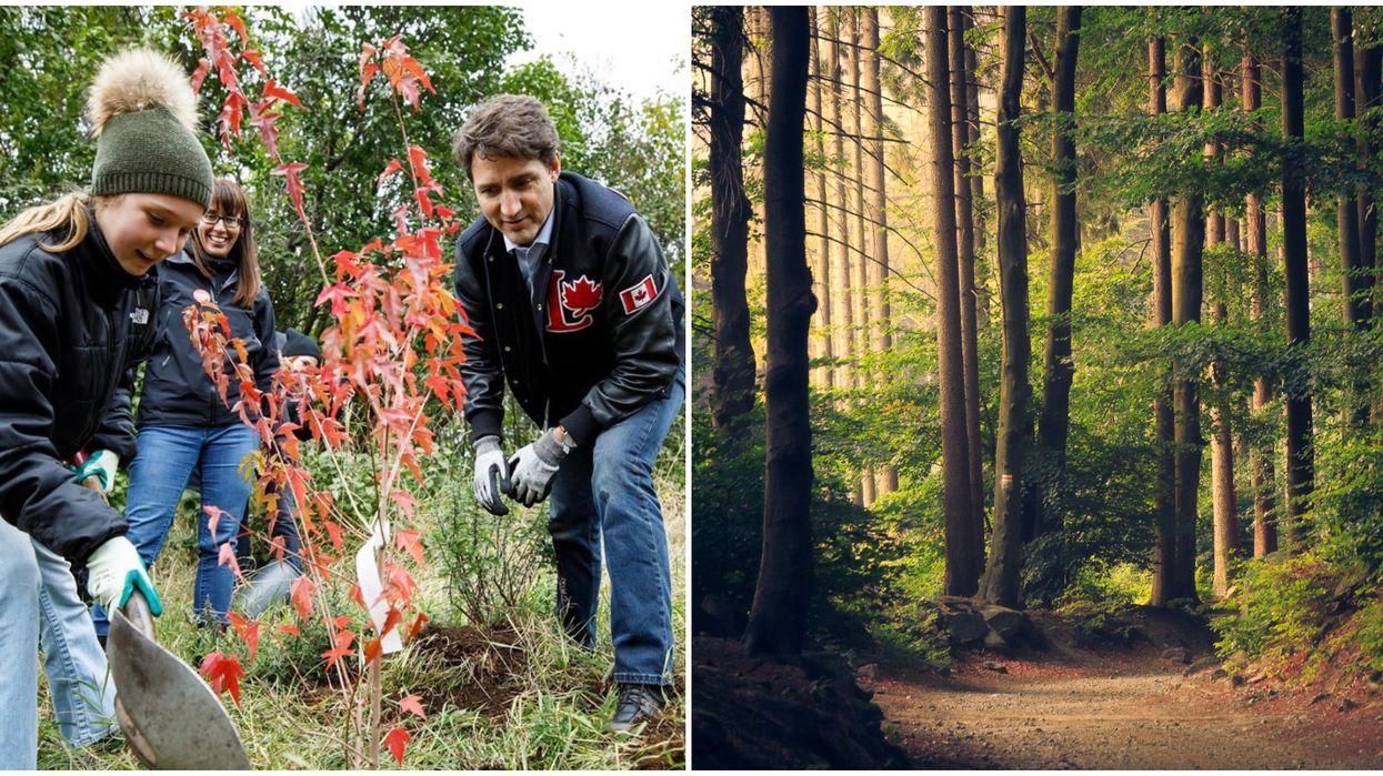 Justin Trudeau's Debate Preparation Includes Tree Planting In Ontario