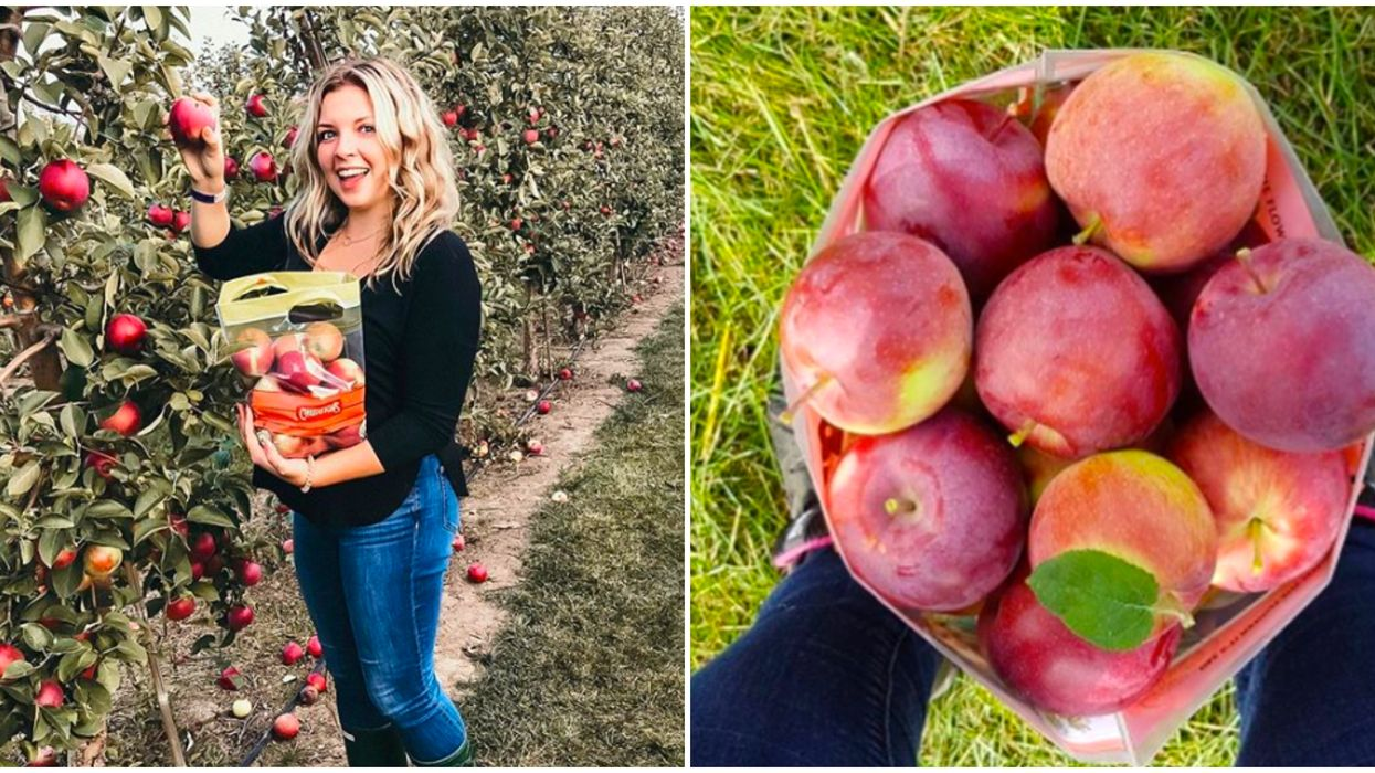 9 Orchards In Ontario Where You Can Go On Adorable Apple Picking Adventures