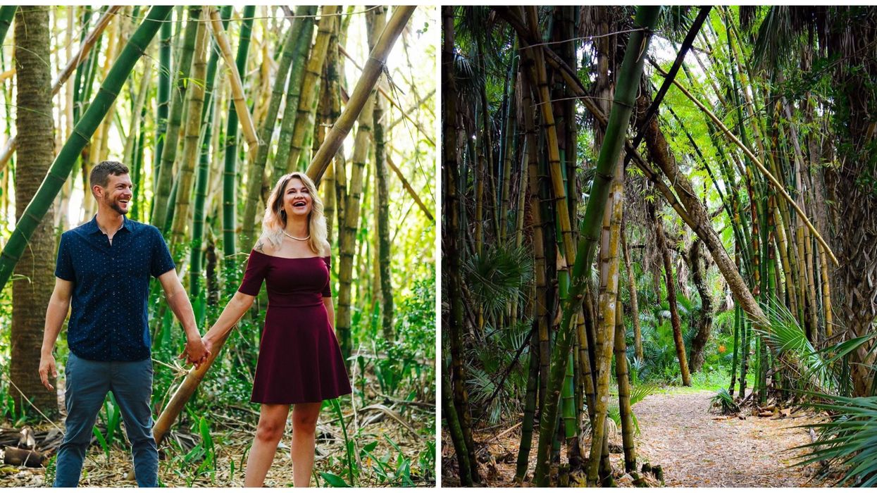 unique state parks in florida include this one with a bamboo forest