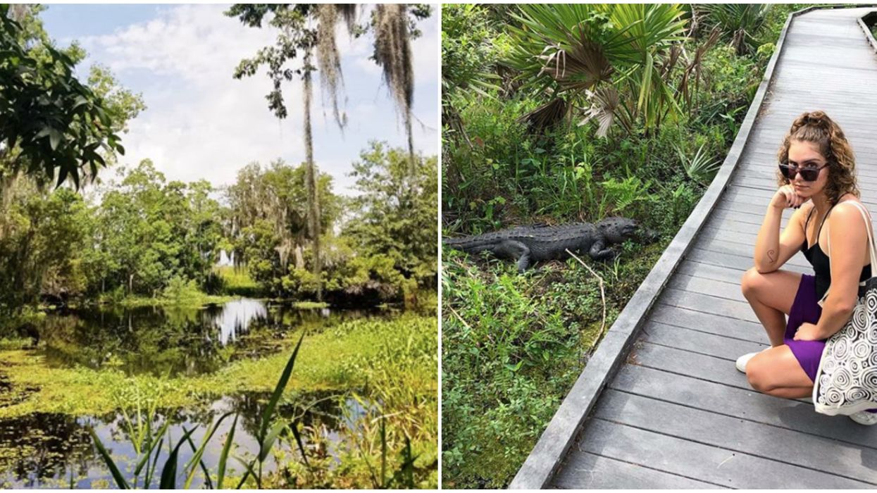 Things To Do In Louisiana Must Include Exploring This Wetlands Marsh Filled With Gators