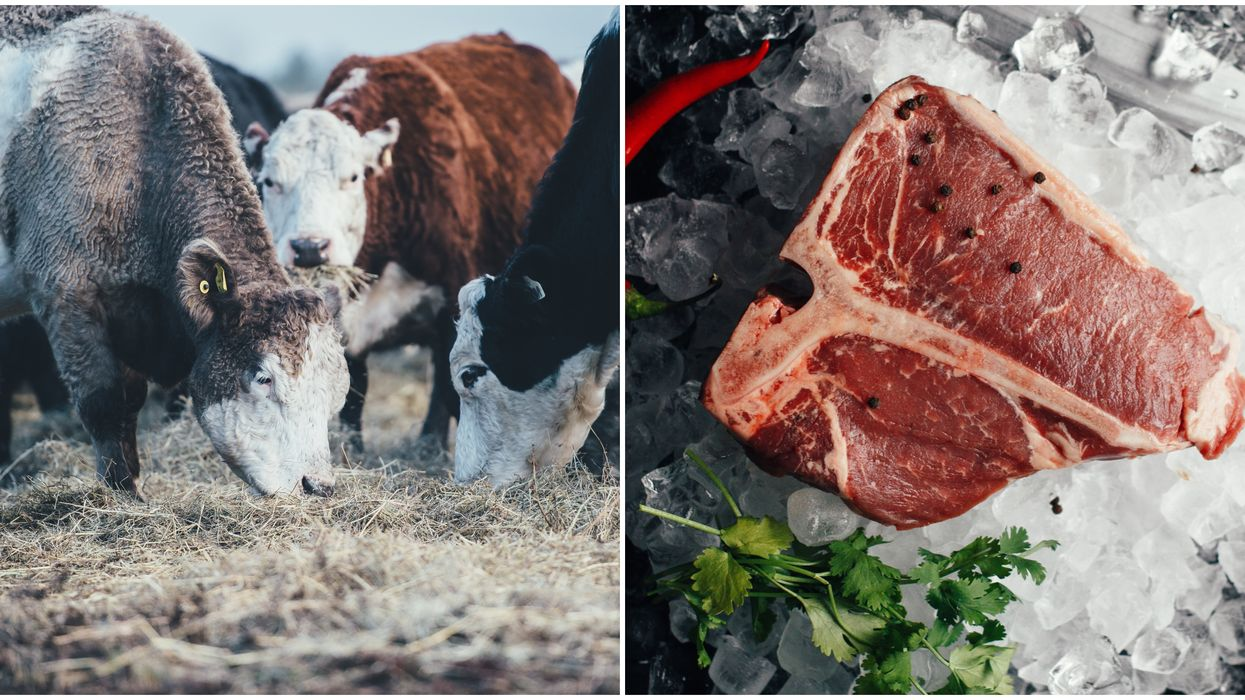 Over 1000 Different Beef & Veal Products Were Recalled In Canada Due To E. Coli In October