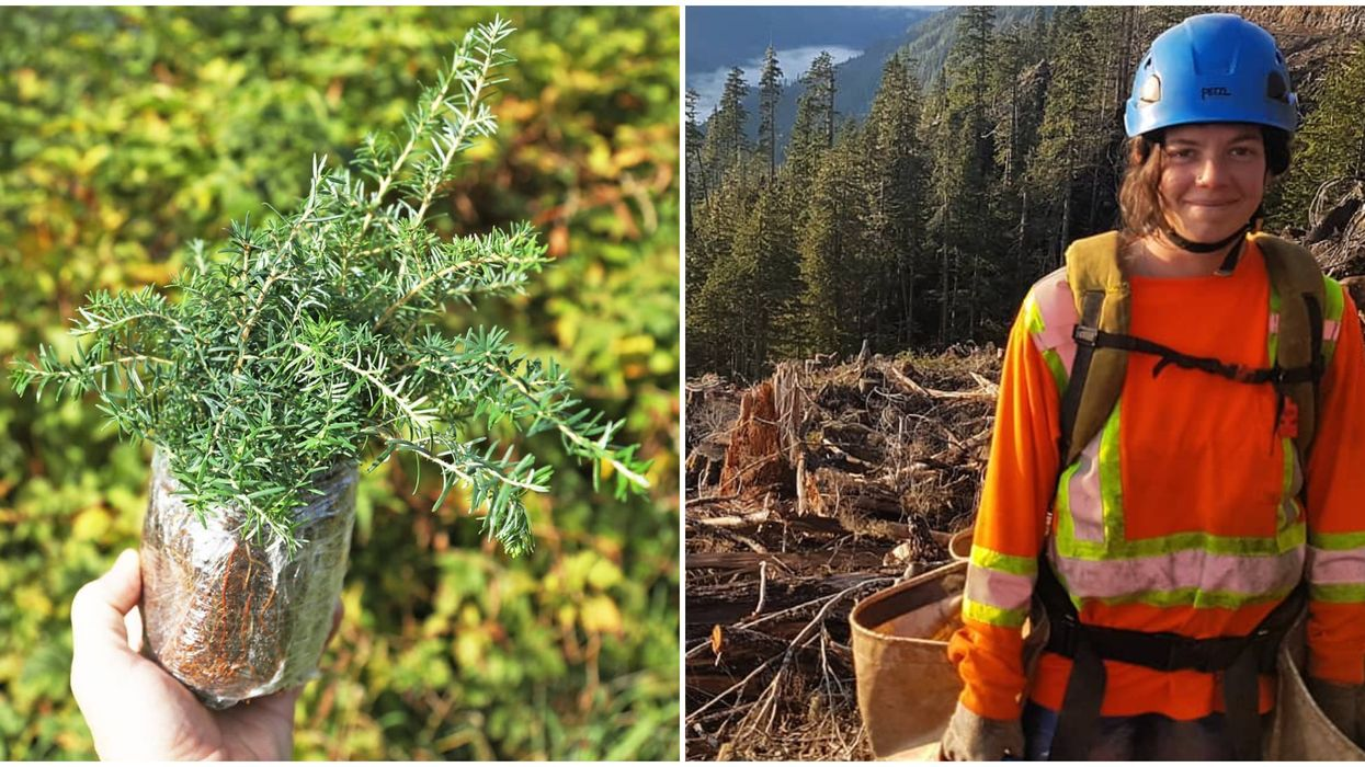 If you've ever wondered it's like to have one of those B.C. tree planting jobs, then there's no better time to find out than next summer. While there isn't a complete census available of how many tree planters work in B.C., estimates from the Western Forestry Contractor's Association put the number at around 4000. With B.C. about to massively increase the number of trees planted this coming summer, there's going to be plenty of jobs up for grabs.