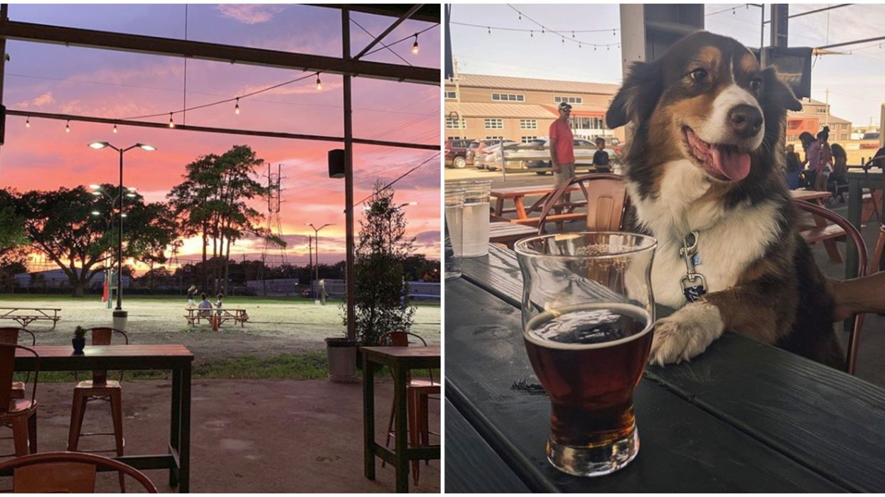 Houston Just Opened A New Dog-Friendly Bar With Ball Courts And A Dog Park