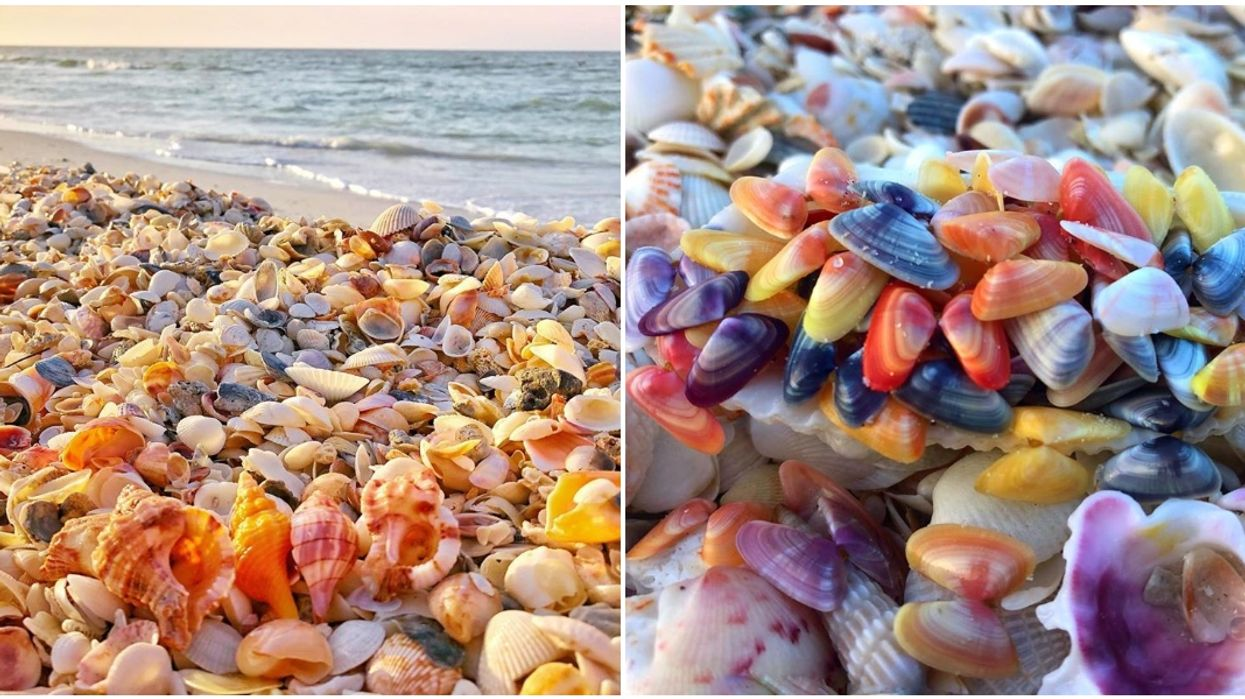 You Can Find The Most Gorgeous Pastel-Colored Seashells Covering This Florida Beach