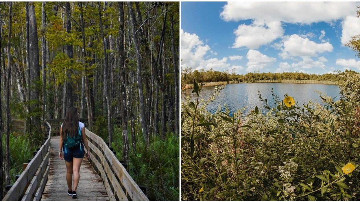 You'll Discover A Hidden Lake In This South Florida Forest