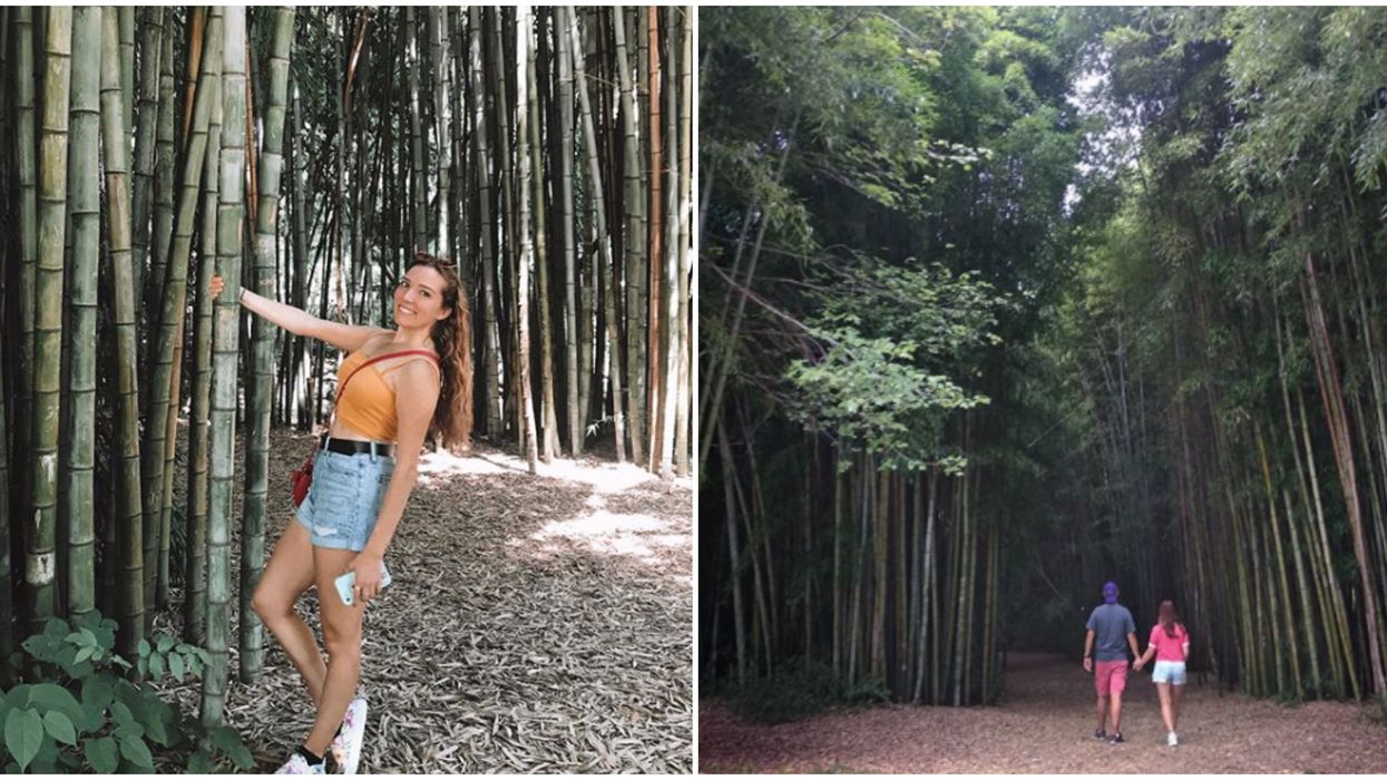 Travel To North Carolina To Visit This Hidden Bamboo Forest & It's Free