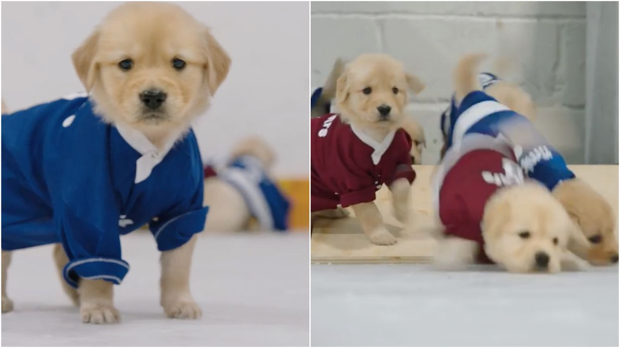 Tim Hortons Brought Together Hockey & Puppies & It's Honestly Pure Canadian Joy