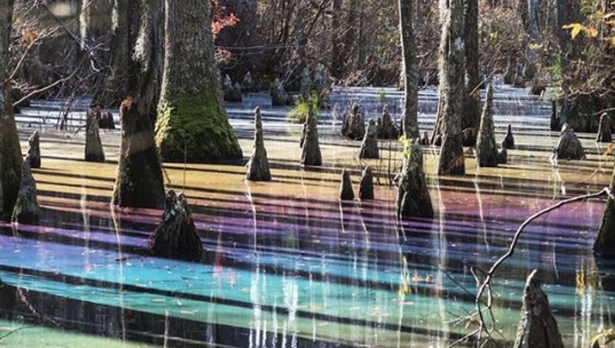 Este pantano oculto en Florida tiene todos los colores del arcoíris y es mágico