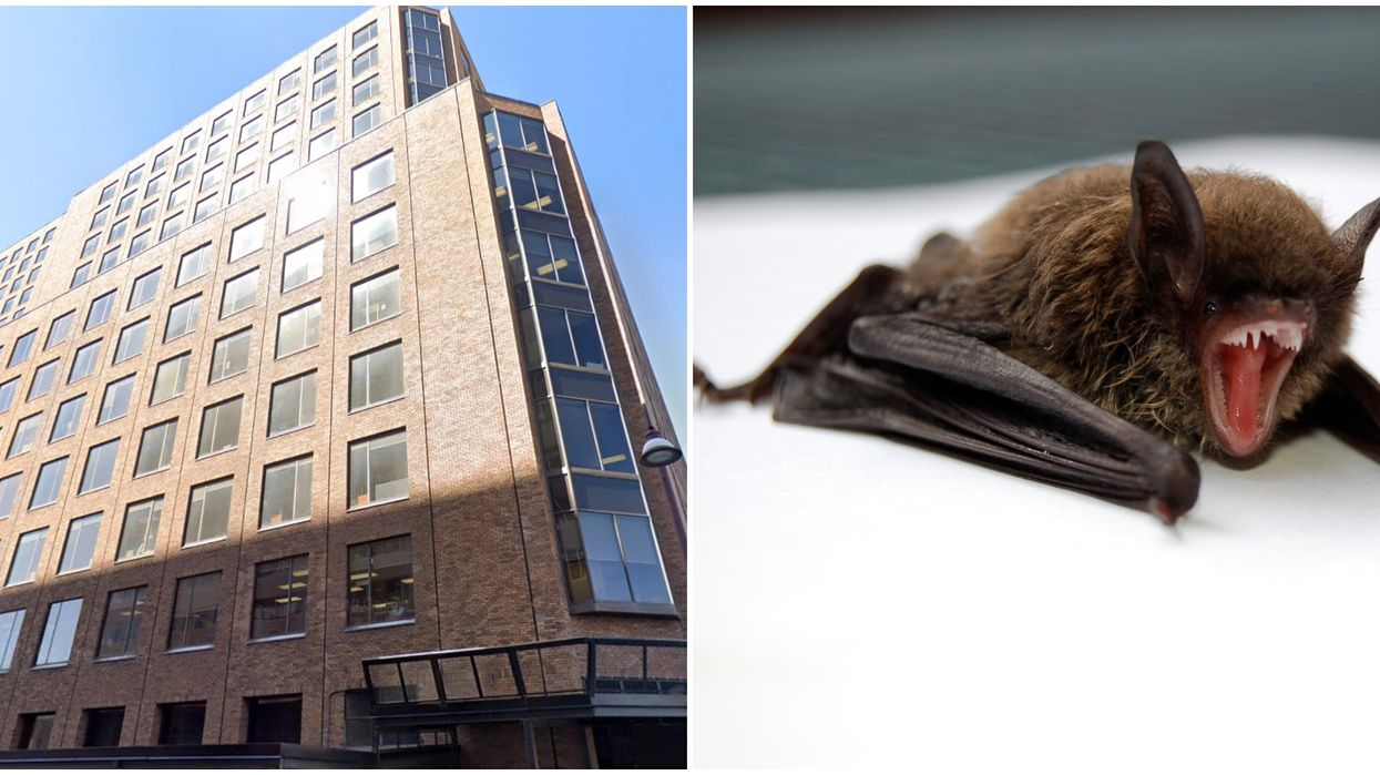 Bed Bugs In A Canadian Government Building Have Been Joined By Mice & Even A Bat